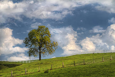 Laura James Photograph - Lone Tree And Fences by Laura James
