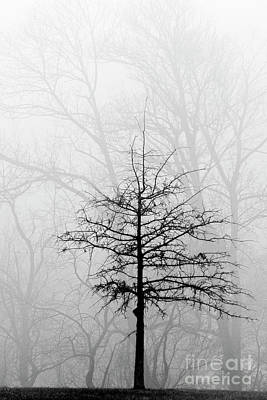 Photograph - Lone Tree And Fog - D007636bw by Daniel Dempster