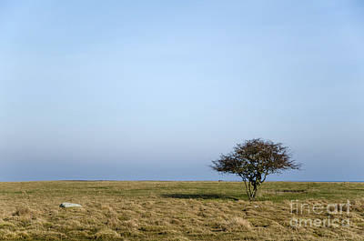 Rights Managed Images Photograph - Lone Tree At Empty Grassland by Kennerth and Birgitta Kullman