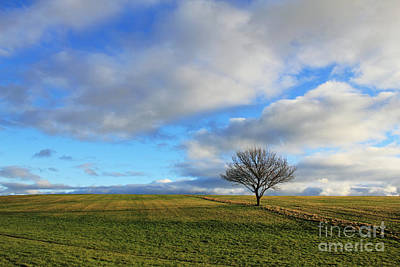 Lone Tree At Epsom Downs Uk Art Print