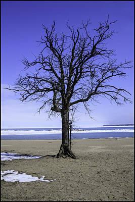 Life Gaurd Photograph - Lone Tree At Fort Gratiot Light House  by LeeAnn McLaneGoetz McLaneGoetzStudioLLCcom