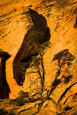 Art Print featuring the photograph Lone Tree At Landscape Arch by Jay Stockhaus