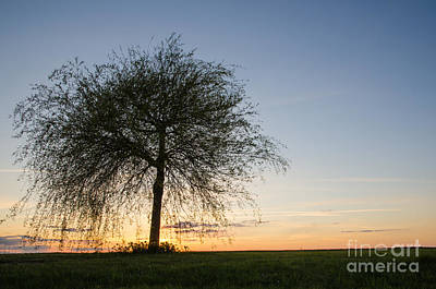 Photograph - Lone Tree At Sunset by Kennerth and Birgitta Kullman