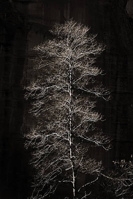 Photograph - Lone Tree by Bob Coates