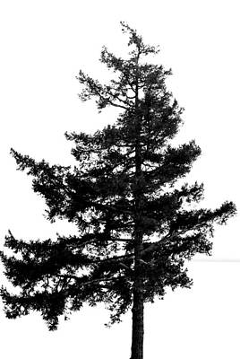 Photograph - Lone Tree - Bw by Marilyn Wilson