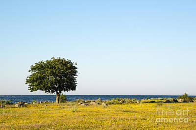 Photograph - Lone Tree By The Coast by Kennerth and Birgitta Kullman