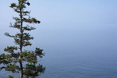 Photograph - Lone Tree By The Water In Acadia National Park by Randall Nyhof