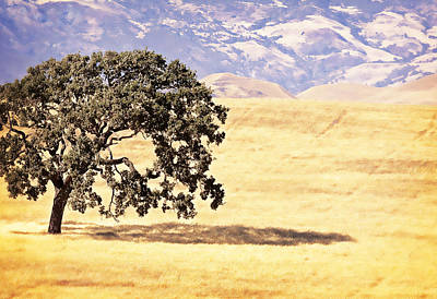 Photograph - Lone Tree by Caitlyn  Grasso