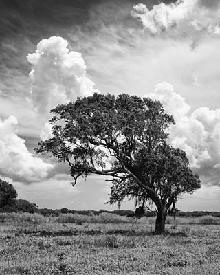 Photograph - Lone Tree by Charles McKelroy