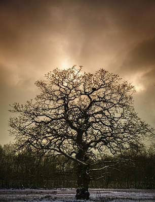 Winter Trees Photograph - Lone Tree by Amanda Elwell