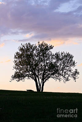 Photograph - Lone Tree by Deb Kline