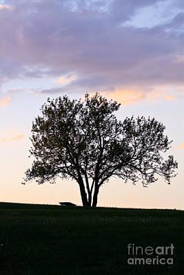 Photograph - Lone Tree by Deb Kline