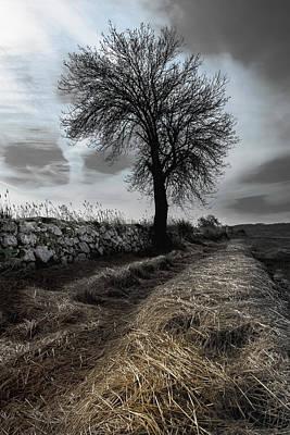 Photograph - Lone Tree by Edgar Laureano