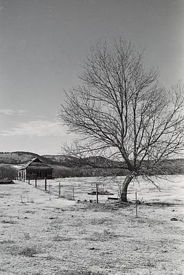 Photograph - Lone Tree Homestead by HW Kateley