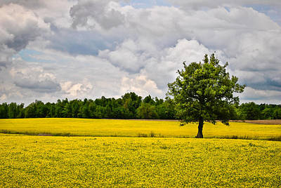 Photograph - Lone Tree In Field Of Wildflowers by Greg Jackson