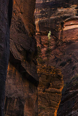 Zion Photograph - Lone Tree In The Canyon by Andrew Soundarajan