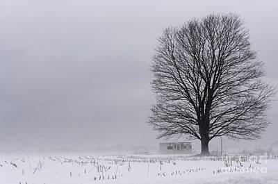 Photograph - Lone Tree In The Fog by Debra Fedchin