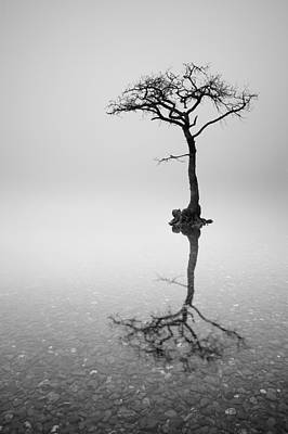 Milarrochy Bay Photograph - Lone Tree In The Mist by Grant Glendinning