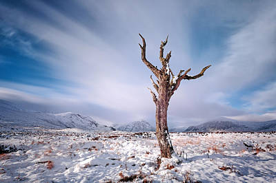 Lone Tree In The Snow Art Print by Grant Glendinning