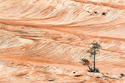 Photograph - Lone Tree In The Swirling Sandstone by John McArthur