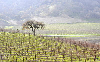Lone Tree In The Vineyard Art Print by AJ  Schibig