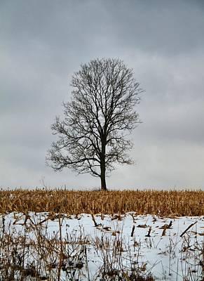 Cornfield Photograph - Lone Tree In Winter by Dan Sproul