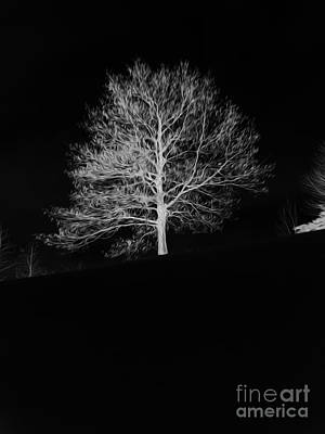 Photograph - Lone Tree In Winter by David Bearden