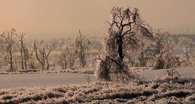 Photograph - Lone Tree In Winter by Douglas Pike