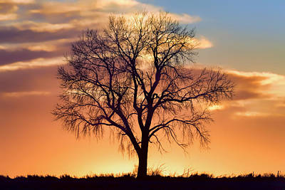 Lone Tree In Winter - Sunset - Centered Print by Nikolyn McDonald