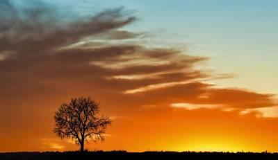 Photograph - Lone Tree In Winter - Sunset - Minimalism by Nikolyn McDonald
