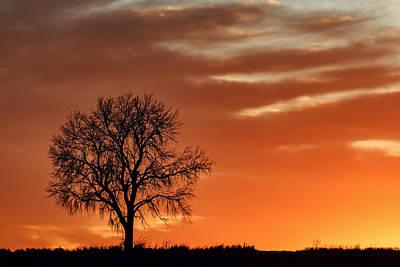 Lone Tree In Winter - Sunset - Silhouette Art Print by Nikolyn McDonald
