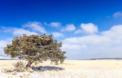 Pine Cones Photograph - Lone Tree by Jon Manjeot