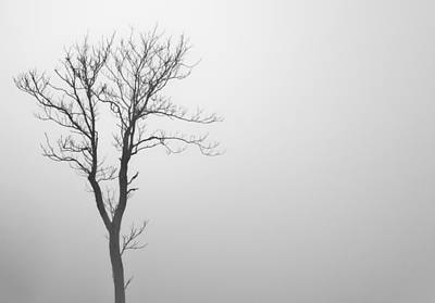 Photograph - Lone Tree by Jonny D