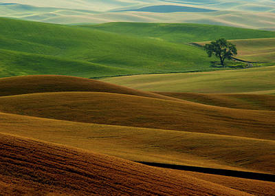 Contour Farming Photograph - Lone Tree by Latah Trail Foundation