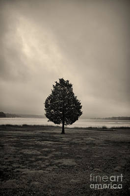 Photograph - Lone Tree Looking South by David Gordon