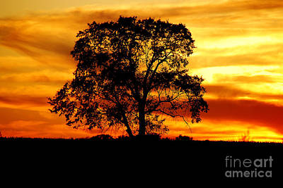Art Print featuring the photograph Lone Tree by Mary Carol Story