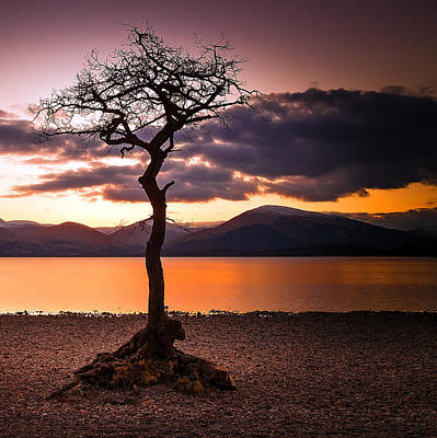 Lone Tree Of Loch Lomond Art Print