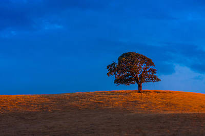 Antique Maps - Lone Tree On A Hill At Sunset by Marc Crumpler