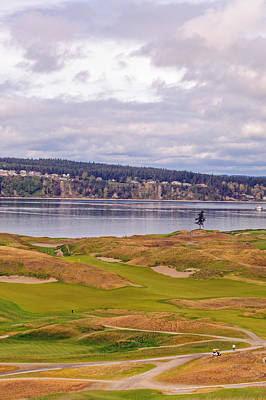 Photograph - Lone Tree On Chambers Bay by Tikvah's Hope