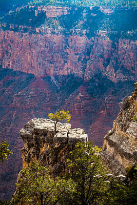Photograph - Lone Tree On Outcrop Grand Canyon by Ed Gleichman
