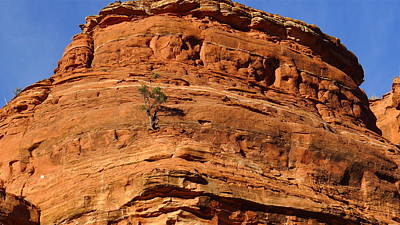 Photograph - Lone Tree On Sedona Rock by Denise Mazzocco