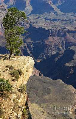 Grand Canyon Photograph - Lone Tree Overlooking Grand Canyon National Park Vertical by Shawn O'Brien
