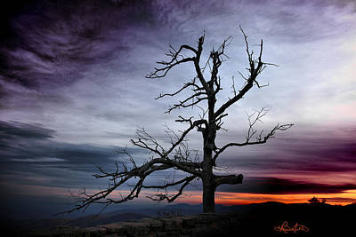 Photograph - Lone Tree by Renee Sullivan