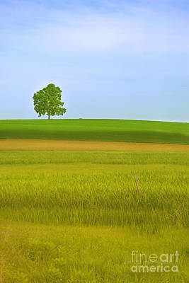 Lone Tree Art Print by Rima Biswas
