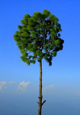 Lone Tree Print by Salman Ravish
