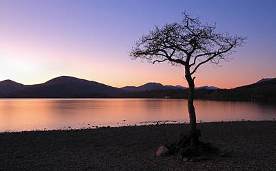 Milarrochy Bay Photograph - Lone Tree Sunset by Grant Glendinning