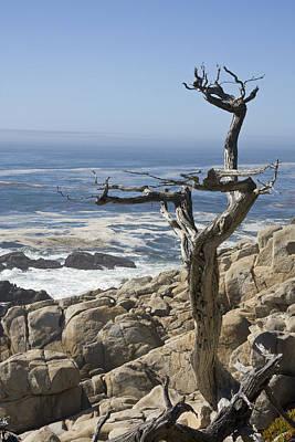 Photograph - Lone Tree by Susan Leonard