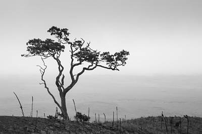 Art Print featuring the photograph Lone Tree by Takeshi Okada