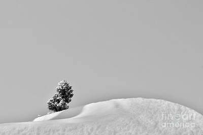 Photograph - Lone Tree Upon The Snow by Nina Silver