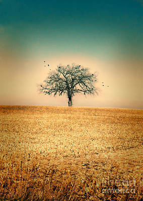 Photograph - Lone Tree With Birds by Jill Battaglia